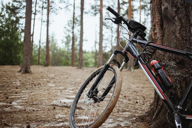 松林にマウンテンバイクが宿泊。