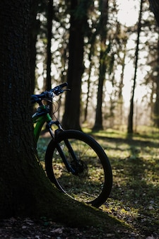 Mountain bike in forest on sunset, healthy and ecology concept