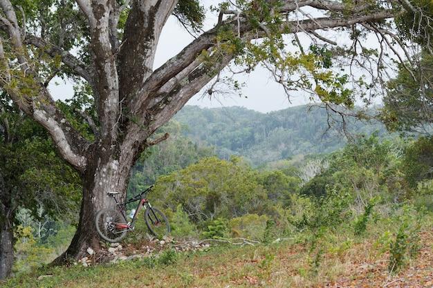 ドミニカ共和国の山の丘の中の木の近くのマウンテンバイク。
