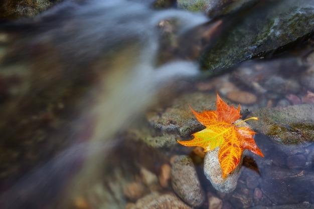 Горный ручей и кленовый лист. символ осени крупный план.