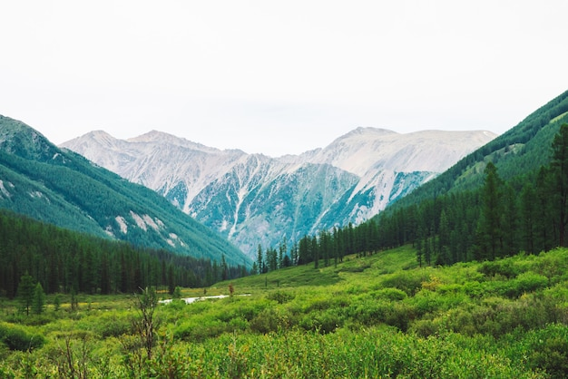 Горный ручей в долине против чудесных гигантских гор. богатая растительность и хвойный лес высокогорья.