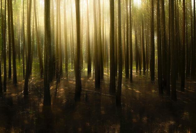 Горный темный лес