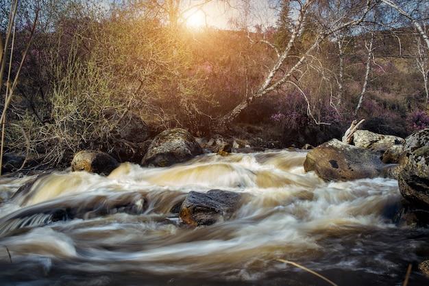 山の流れの速い川、日光の下で岩の間を流れる水。急な小川に大きな石がある春の風景。