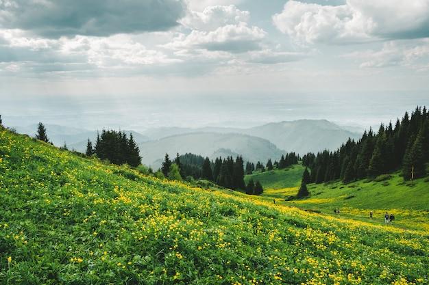 アルマトイの街の近くのカザフスタンの山の花畑と黄色い花の牧草地