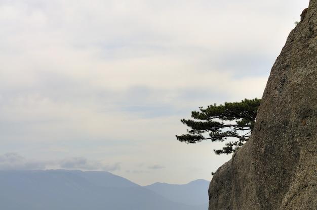 Горный туманный пейзаж, зеленое дерево на вершине скалистого обрыва. силуэты гор на