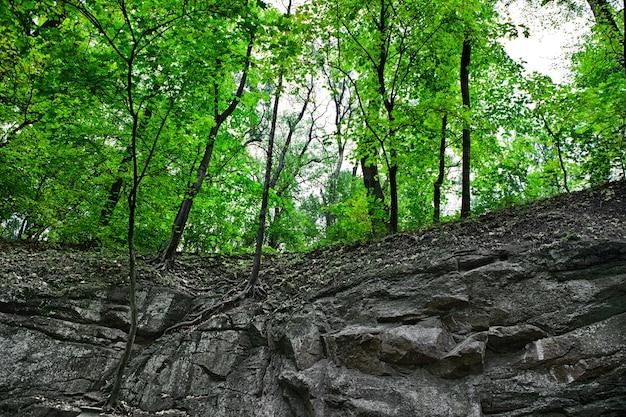 Горный лес. красивый фон из камня, мха.