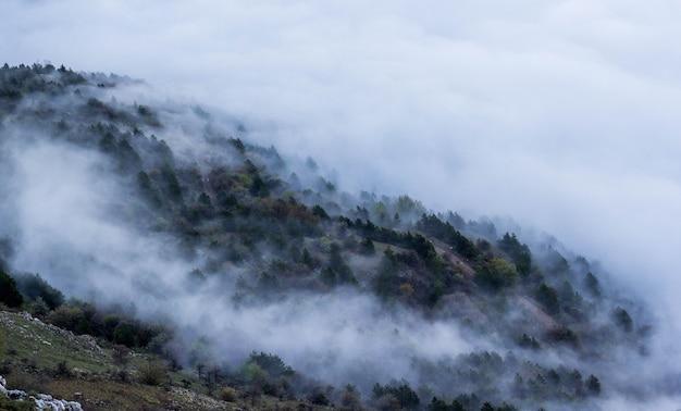 霧の中で山の森
