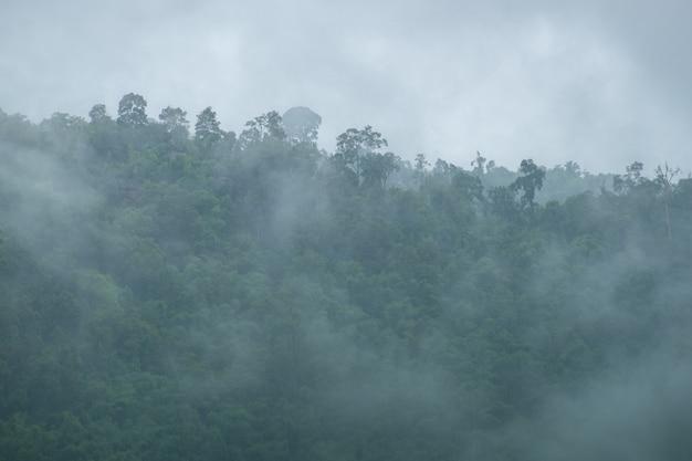 朝の雨上がりの霧の中の山林清々しく清涼感