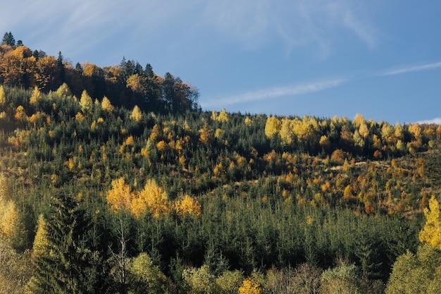 山の森の風景と青い空。山の谷に日光が差し込む雄大な木々。