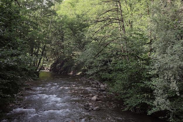 Горная лесная река Premium Фотографии