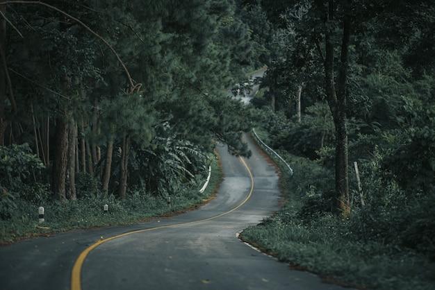 산림, 자연이 가장 아름다운 태국 치앙라이 산속의 울창한 소나무 숲길.