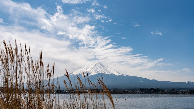 Mountain fuji background with the golden meadow grass