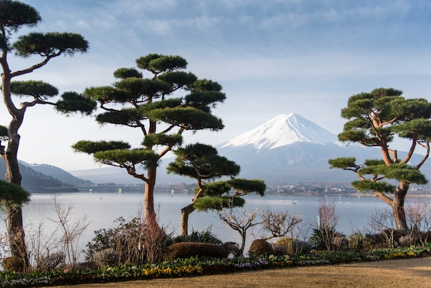 Mountain fuji fujisan from kawaguchigo lake with garden in foreground at yamanashi
