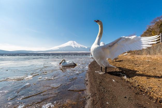 山富士山中とグース