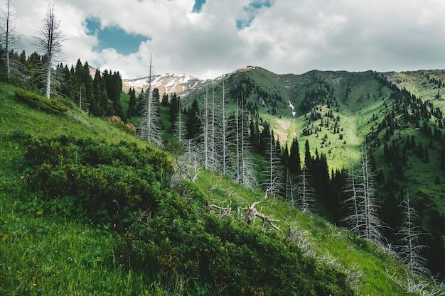 Mountain furmanov peak in summer landscape with dead trunks of fir