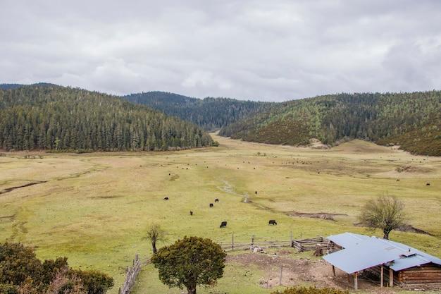 Mountain grass field farmhouse