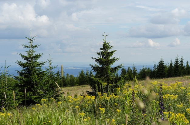 Mountain grass and fir tree on blue sky background