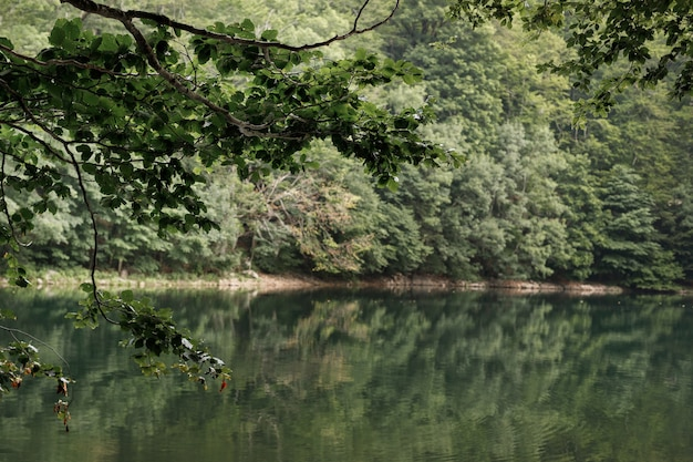 Mountain green lake. trees by the water. relaxation and temperation