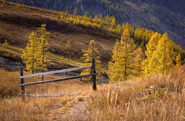 Mountain landscape against the background of yellow larches a fragment of a wooden fence