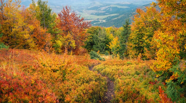 Mountain landscape hills at autumn covered red carpet leaves