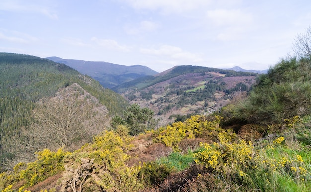 黄色い花と松の木のある春の山の風景。
