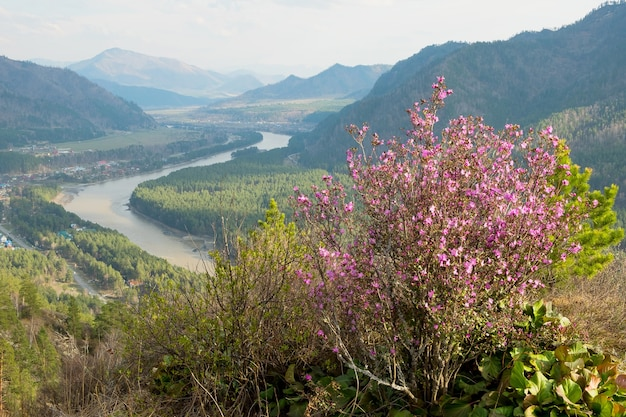 山の斜面にピンクの花が咲く茂みを眺める山の風景