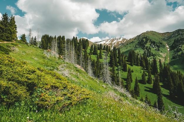 Горный пейзаж с мертвыми стволами ели