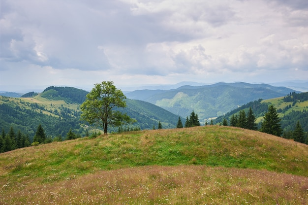 Mountain landscape with grass and flowers in the foreground. sunny day. carpathians, ukraine