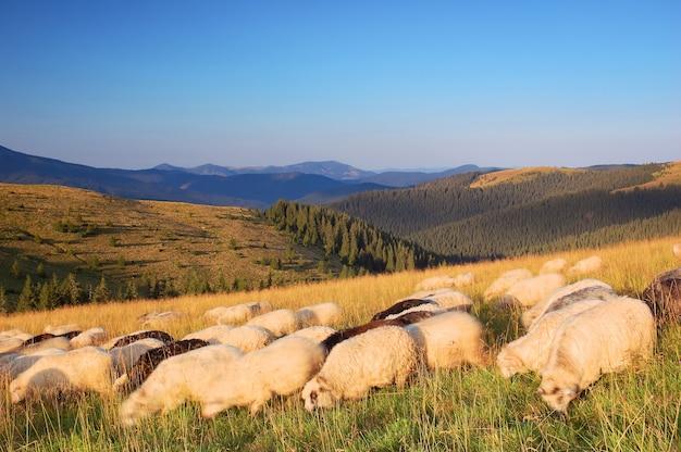 Горный пейзаж с пасущимися овцами