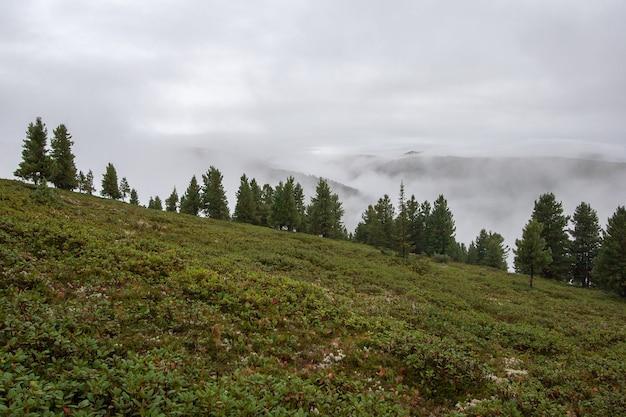 Горный пейзаж с горами в облаках на склоне. на земле много зеленых растений, растут хвойные деревья. поднимается туман.