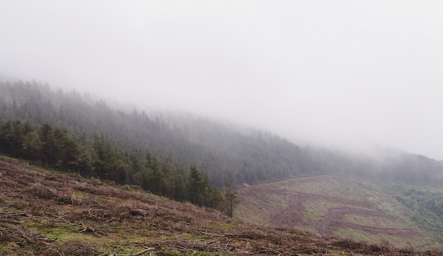 Mountain landscape with pine trees and fog