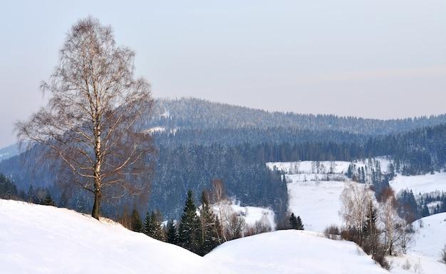 Горный пейзаж со снежным лесом