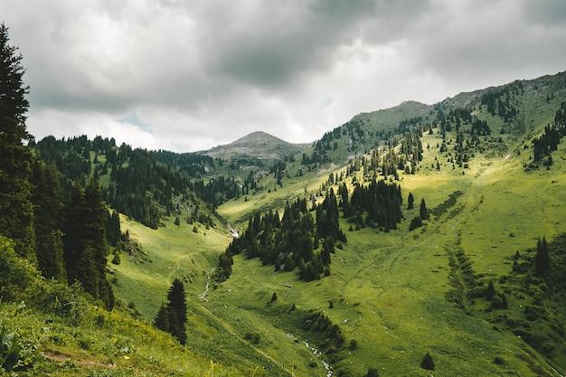 Горный пейзаж с еловым лесом в пасмурную погоду
