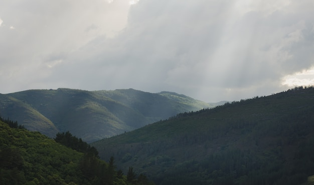 Mountain landscape with trees.
