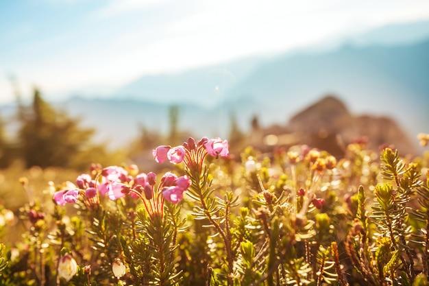Горный луг в солнечный день. естественный летний пейзаж. горы на аляске.