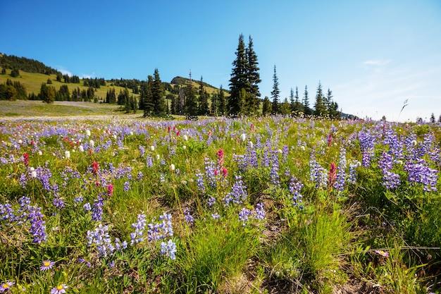 화창한 날에 산 초원입니다. 자연 여름 풍경.