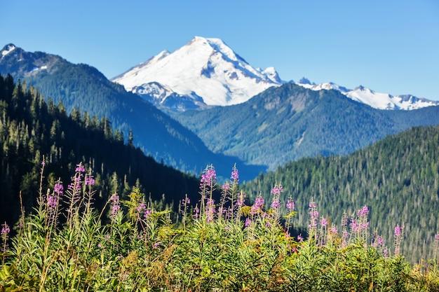 晴れた日の山の牧草地。自然な夏の風景。
