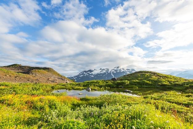 晴れた日の山の牧草地。