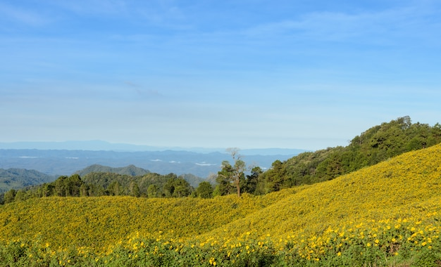 Mountain nature landscape with mexican sunflower blooming in meahongson, thailand.