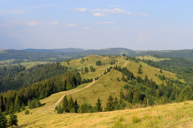 Mountain nature trail among meadows and forest landscape