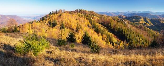 화창한 오후에 산 파노라마입니다. 다채로운가 숲입니다. 카르파티아 산맥, 우크라이나, 유럽