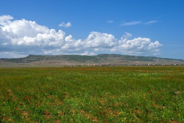 Горное пастбище, маковое поле с красивыми белыми облаками на горизонте