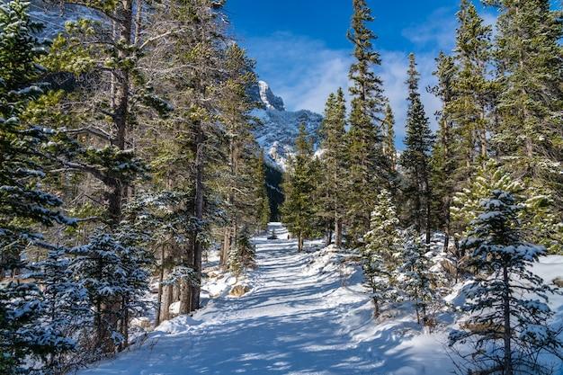 Горная тропа, покрытая снегом в лесу в зимний сезон в солнечный день утром. след озера грасси, канмор, альберта, канада.