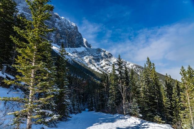 冬の晴れた日の朝、森の中の雪に覆われた山道。グラスイーレイクストレイル