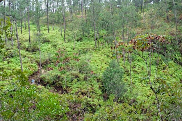 Mountain pine ridge reserve, rain forest