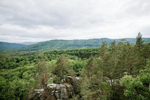 山松と落葉樹林の風景