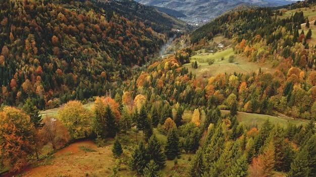 松の葉の茂った森のある山脈空中秋誰も自然の風景霧が緑にマウント