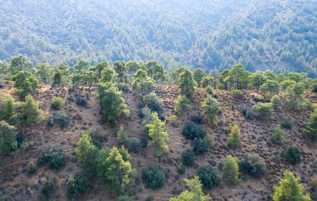 キプロスのトロードス山脈の松の木に覆われた山の尾根
