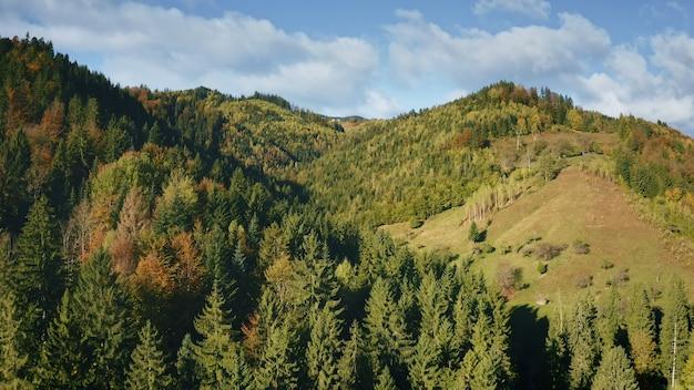 松の木のある山の尾根は、秋の緑の植物や草で誰も自然の風景を森しません