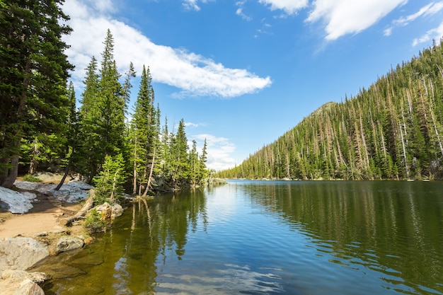 Горная река и вечнозеленый лес по бокам в эстес-парке, штат колорадо, сша.